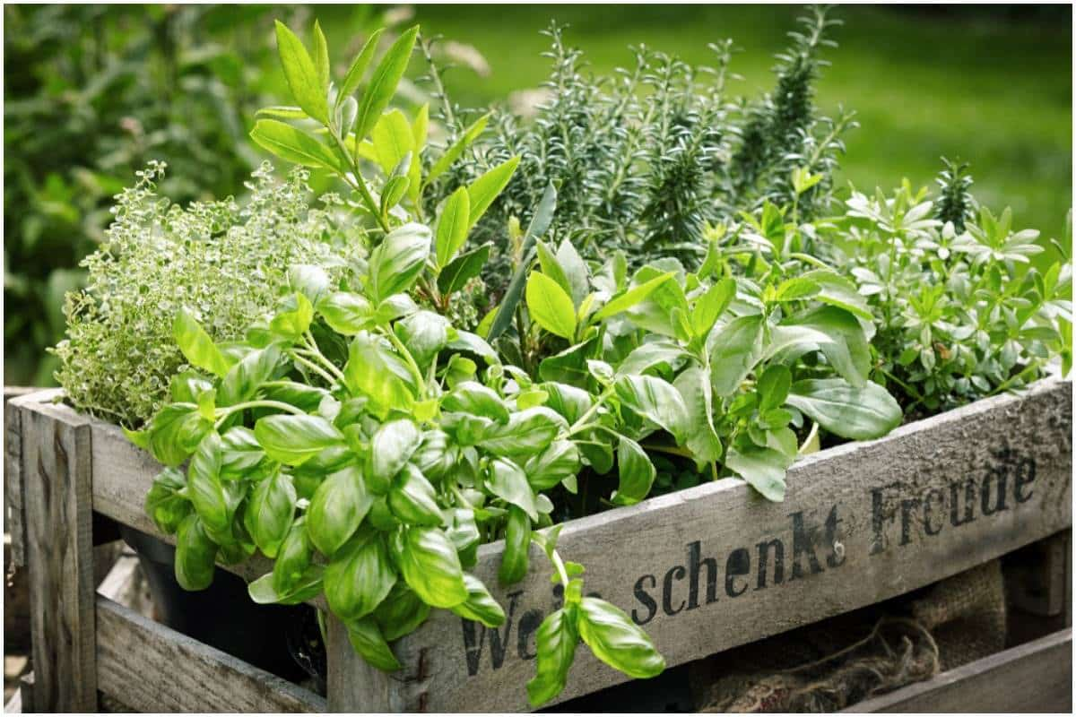 10 Herbs For Good Luck, Prosperity, And Money