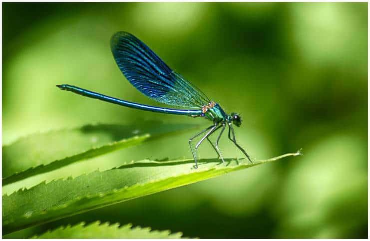 Dragonfly - Spiritual Meaning + Myths & Dream Interpretation