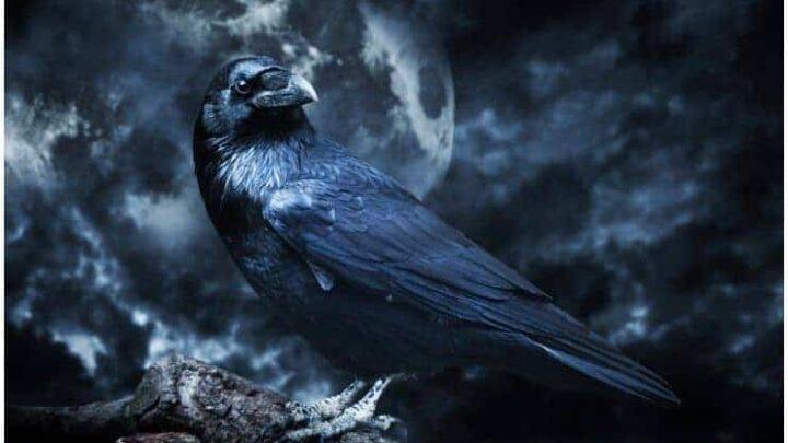 Raven – Spiritual Meaning + Myths & Dream Interpretation