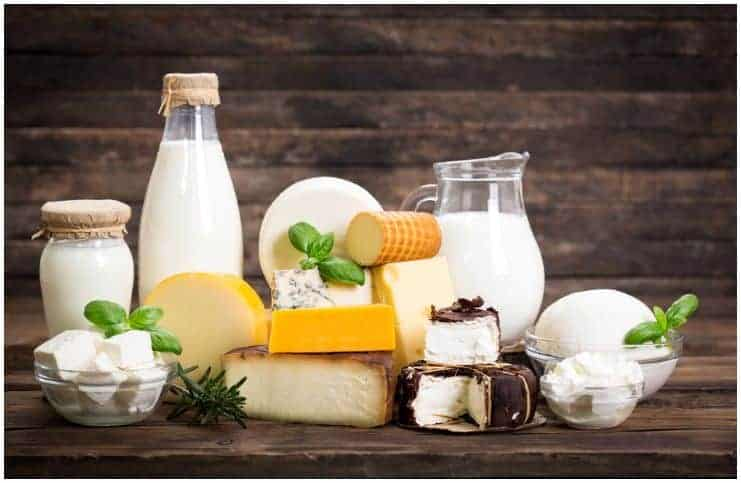 dairy products milk cheese