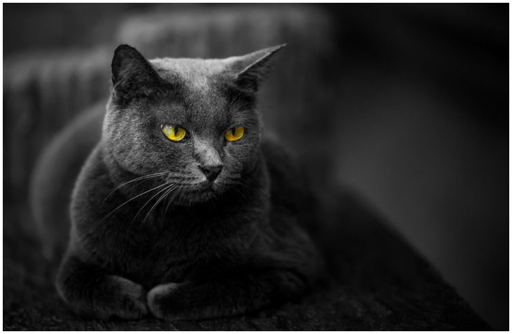 Black Cat Symbolism & Meaning