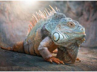 Lizard – Spiritual Meaning Myths Legends + Dream Interpretation