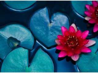 Lotus Flower in Buddhism - Symbol of Enlightenment