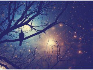 Spiritual Meaning Of Birds Singing At Night - Owl, Raven, Cuckoo, Crow, Stork