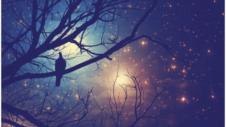 Spiritual Meaning Of Birds Singing At Night – Owl, Raven, Cuckoo, Crow, Stork