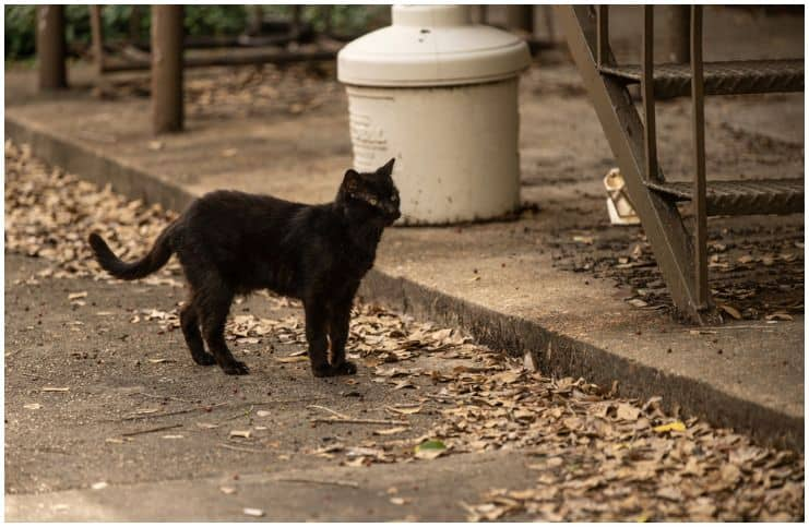 Spiritual Meaning of Black Cat Crossing Your Path Explained