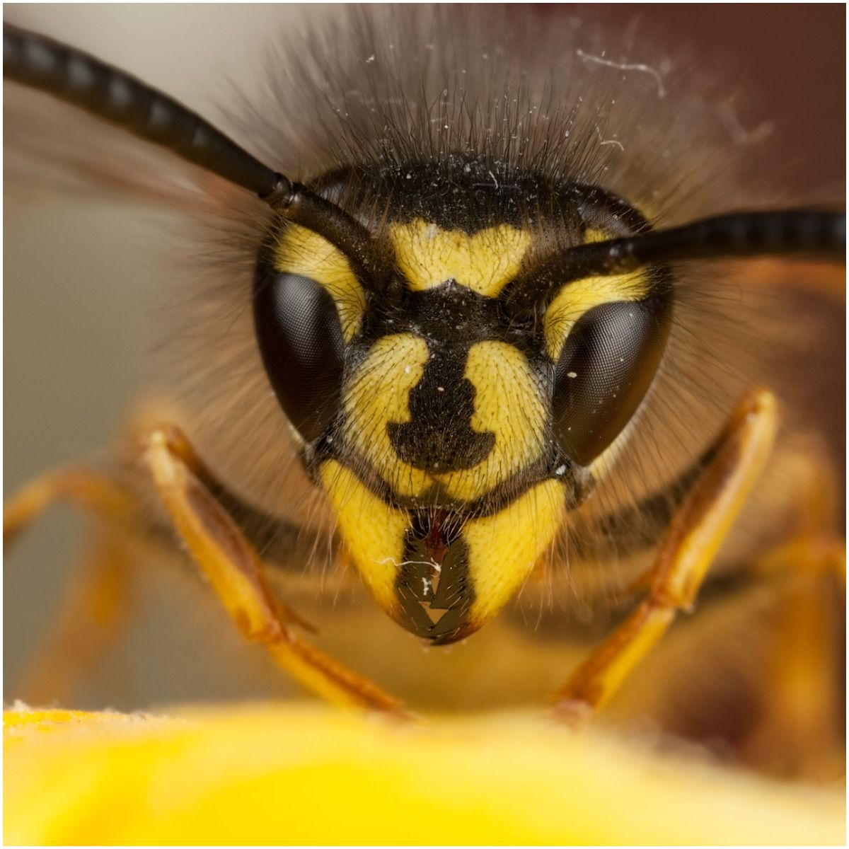 Spiritual Meaning of Wasp + Myths & Legends