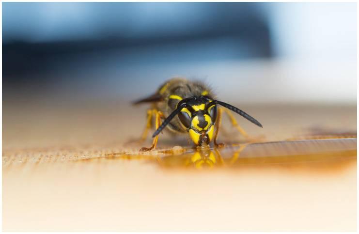 Wasp - Spiritual Meaning Legends + Dream Interpretation