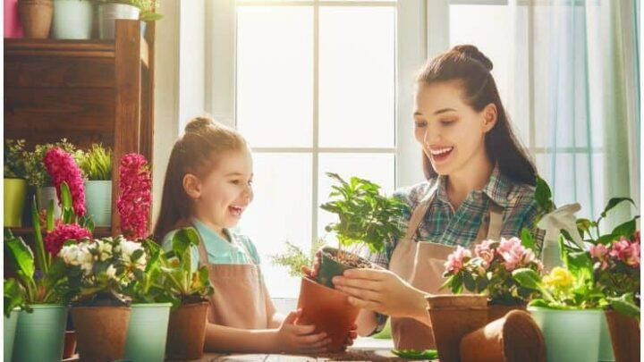 15 Indoor Plants That Create Positive Energy In Your Home