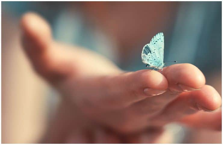 Spiritual Meaning of Butterfly Landing On You + Superstitions & Dream Interpretation