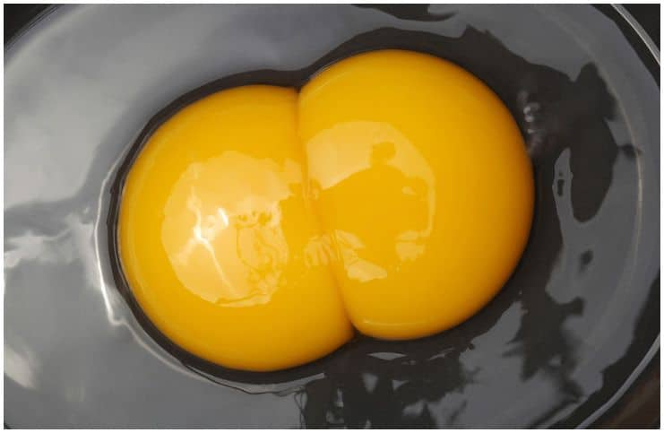 What is a double yolk egg