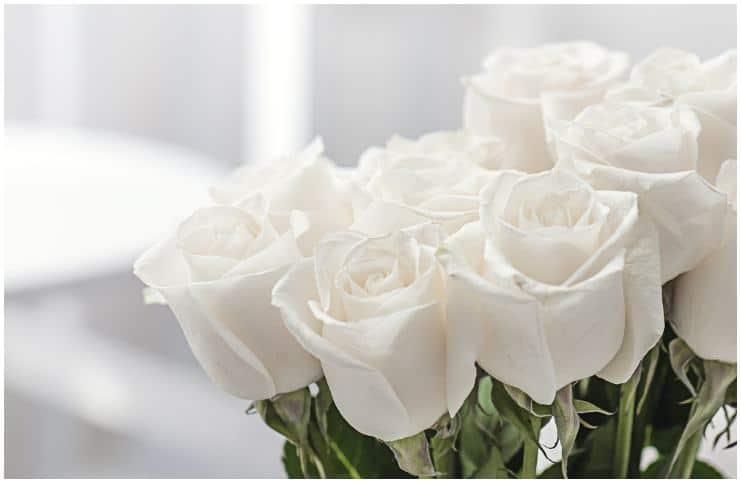 Spiritual Meaning of White Roses + Dream Interpretation