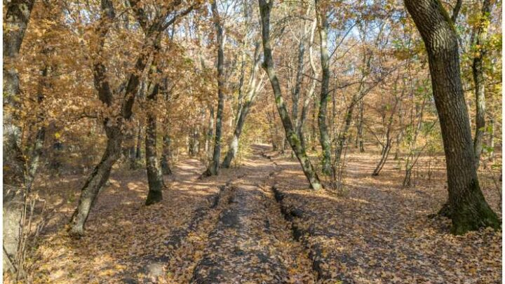 28 Interesting Facts About Hoia Baciu Forest Circle