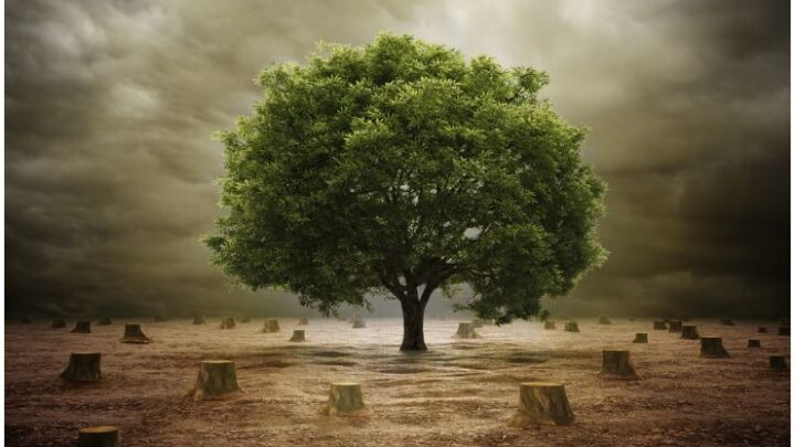 The Tree of Life – Meaning & Symbolism