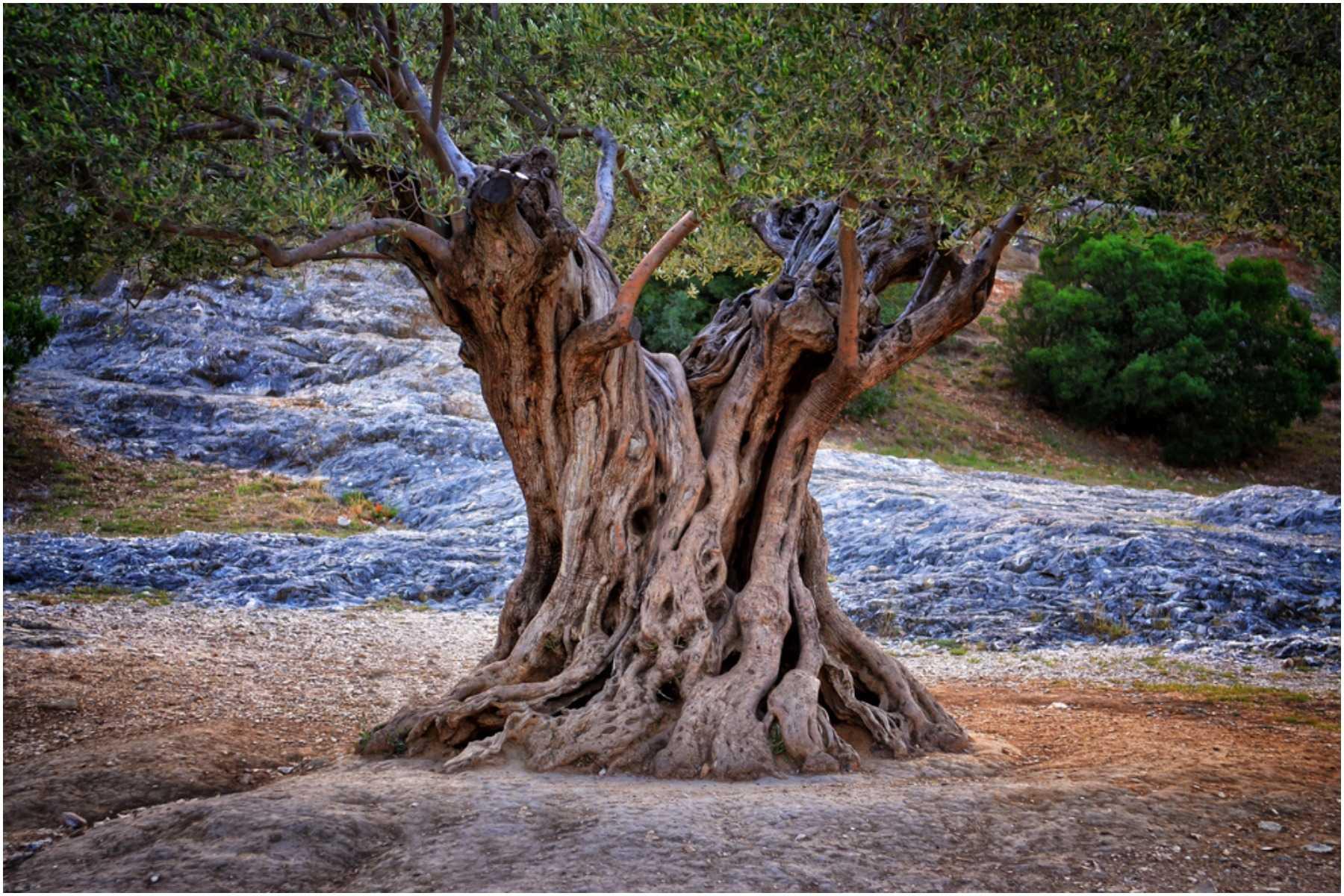 tree of life symbol