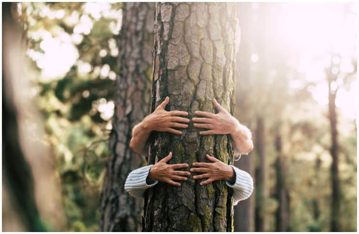 couple hands in nature tree love