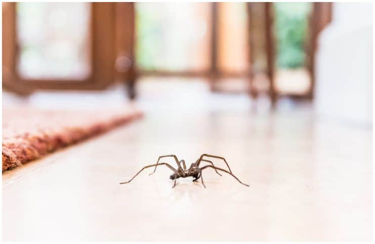 If You See Spiders Often, This May Be Why