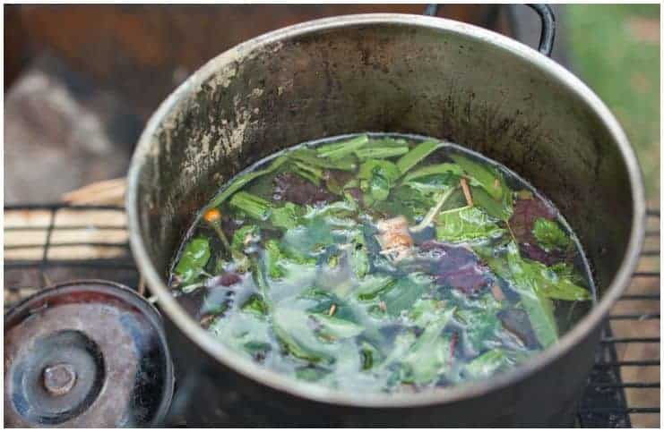 Ayahuasca Effects, Hazards & Warnings