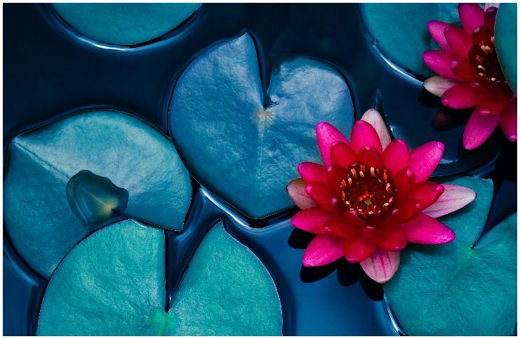 The Lotus symbol meaning