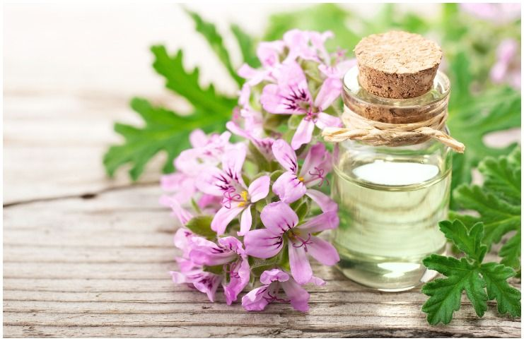 Geranium essential oil for protection