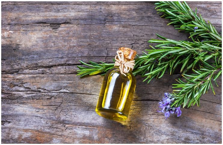 Rosemary essential oil for protection