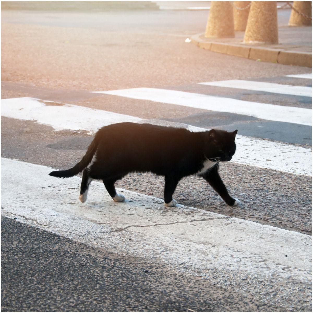 Spiritual Meaning of Black Cat