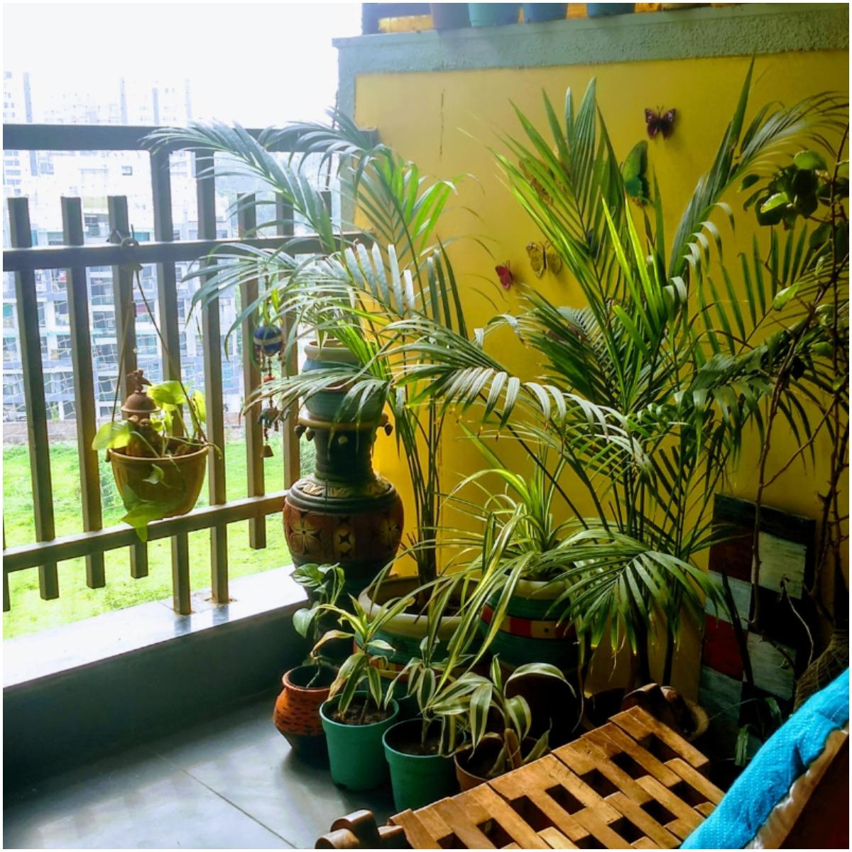 Areca Palm Plant That Create Positive Energy In Your Home