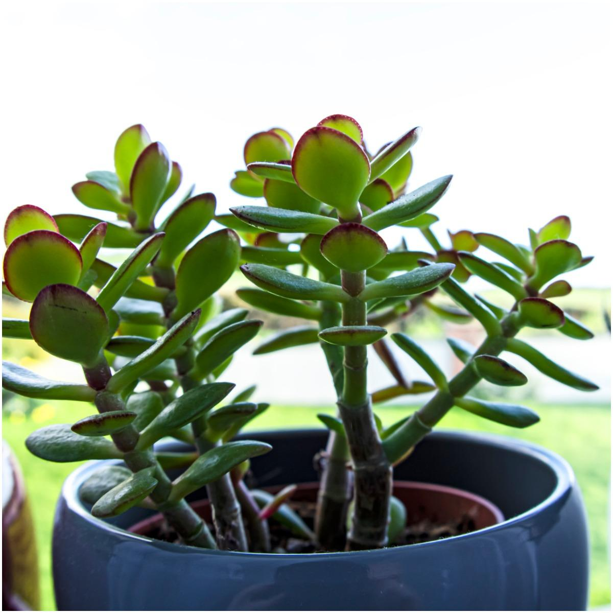 Money Plant That Create Positive Energy In Your Home