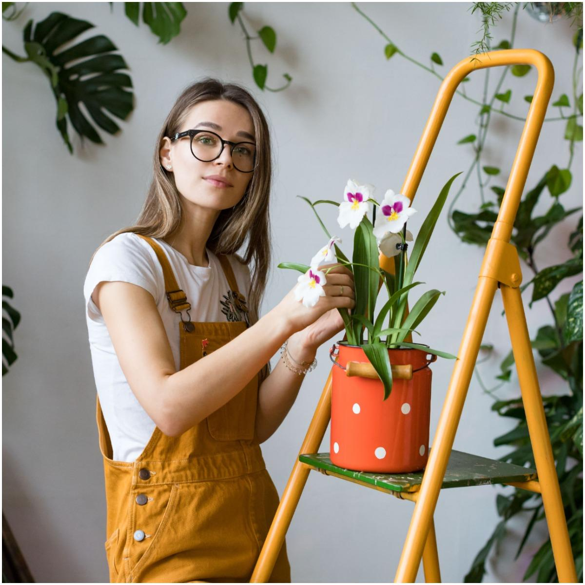 Orchid Plant That Create Positive Energy In Your Home