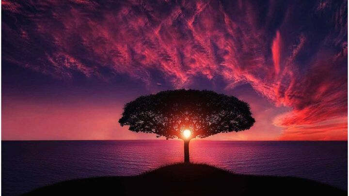 Tumi Bhaja re Mana Mantra (Mantra of Love) – Meaning, Translation, Complete Lyrics