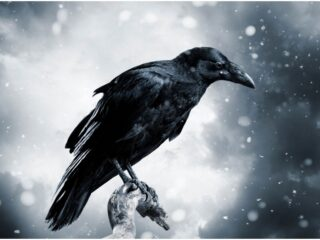 What is the Spiritual Meaning of Seeing Crows + Myths & Dream Interpretation