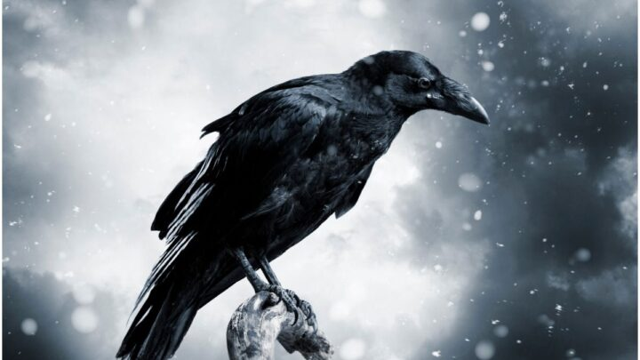 What is the Spiritual Meaning of Seeing Crows? + Myths & Dream Interpretation