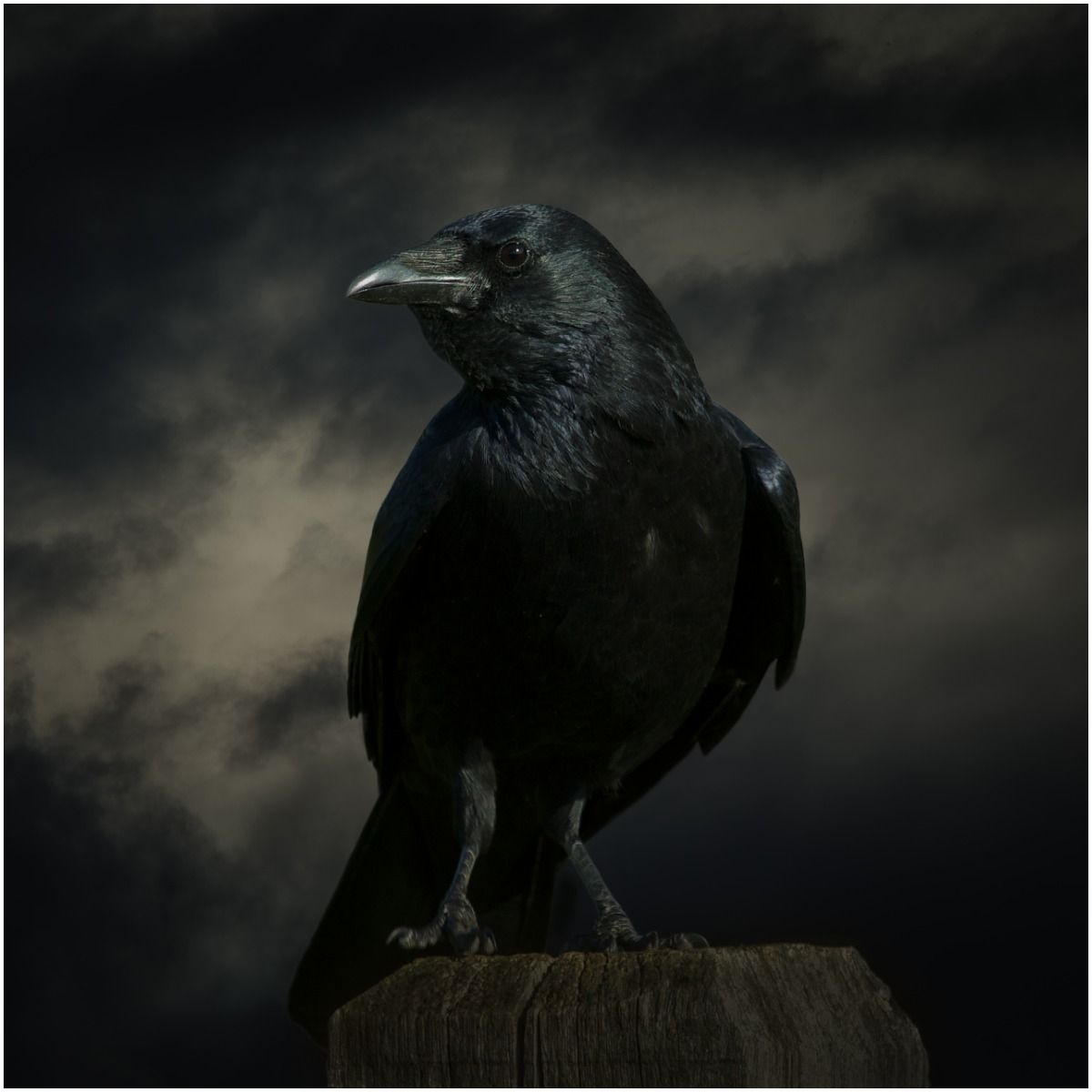 what is the spiritual meaning of seeing crows